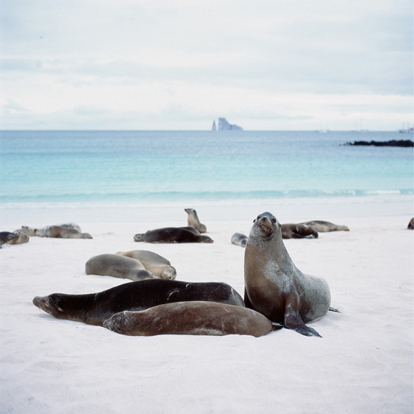 sea lions hotel based tours San Cristobal Galapagos